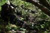 Bild på Ljuddämparkamouflage - Multicam Tropic
